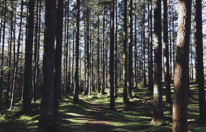 boschi di cingoli